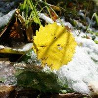 Первый снег...свеженький:)19.09. :: MaOla ***