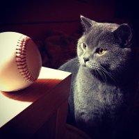 Кот и мяч :: Юлия Годовникова