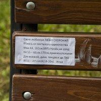 крик души или объявление в Сокольниках :: Елена Попова