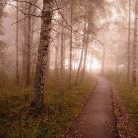 Дорожка сквозь туман :: Николай Белавин