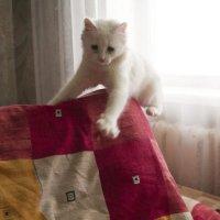 любителям кошек)) :: Оля Кравченко