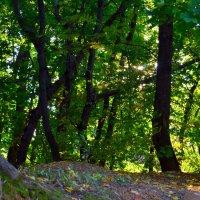В лесу :: Владимир Васильев