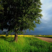 Одиноко в поле у дороги... :: Юрий Морозов