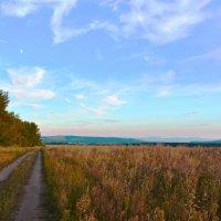 Дорога вдоль поля :: юрий Амосов