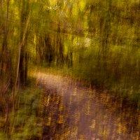 Золотая осень :: Наталья Наумова