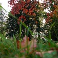 Осень 2 :: Инна *