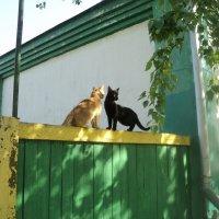 Россия. Кошки. :: Ольга Кривых