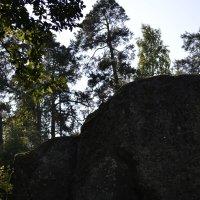 и на камнях растут деревья... :: Игорь Лубницкий