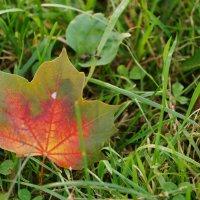 Осень 4 :: Инна *