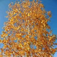 осень :: Люба Вылывана