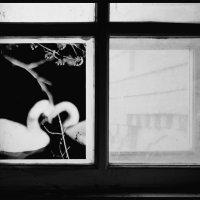 ч/б окно :: Владислав Кравцов