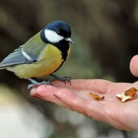 The Titmouse in the hand - better than... :: Roman Ilnytskyi