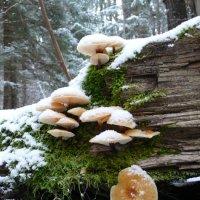 Белеет снег, растут грибы.... :: Андрей Бочаров
