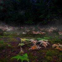 сказочный лес :: ruslic hodjaev