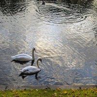 лебеди в Летнем саду :: Valerii Ivanov