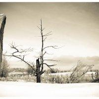 Зимний пейзаж :: Maxim Rozhkov