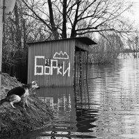 Весна - это Вам не зима... :: Сергей Савельев