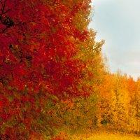 Осенние акварели :: Светлана Вдовина