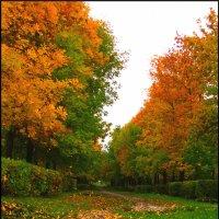 Осень в городе :: Анна Бердникова