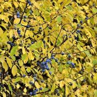 Осенне настроение :: Yuri Silin