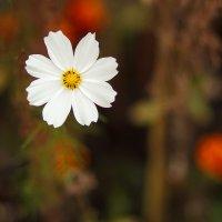 Белый :: Анна Олейник