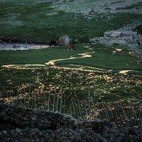 Золотые ручьи :: Лана Григорьева