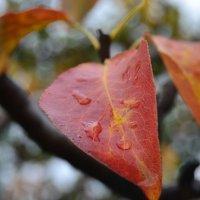 Осень :: Alina Bondar