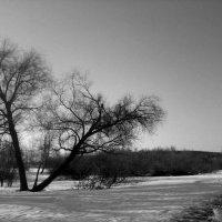 Солнечный холод :: Katarina S