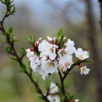 Весна :: Елена Буслаева