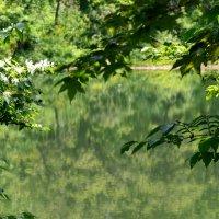 Озеро :: Елена Буслаева
