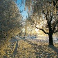 зима.утро.мороз.иней. :: юрий иванов