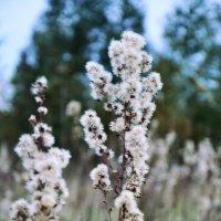 Какой-то цветок :: Сергей Томашев