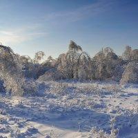 После ледяного дождя :: Aleks
