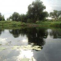 Моя Любимая Россия! Река Битюг. :: Ольга Кривых