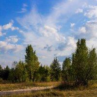 Пейзаж 2 :: Юрий Стародубцев
