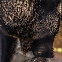 Переноска медвежонка :: Nn semonov_nn