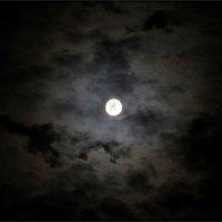 ...в ночной мгле :: Sergey Bagach