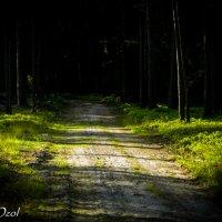 Тропинка в лесу :: Артур Озол