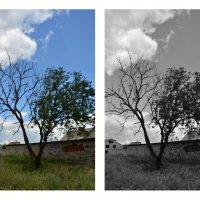 Одинокое дерево :: Анастасия Чуб