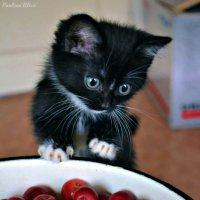 Kitty :: Алиса Павлова