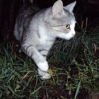 кошка :: VOROBYOFF VOROBYOV