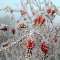 ранние заморозки :: евгений малых