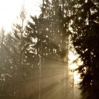 В лесу. :: Рома Рекивчак