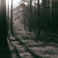 Таинственный лес :: Анна Кудрявцева