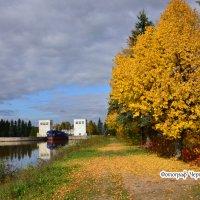 золотая осень :: Ольга Черпухина