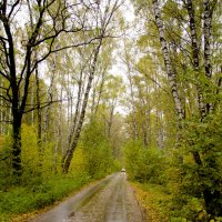 Дорога в осень :: Анастасия Светлова