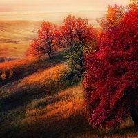 Красная осень :: Марат Закиров