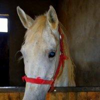 Капля никотина убивает лошадь! :: Маруся Маруся