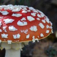 такие вот грибочки... :: Ирина Богданова