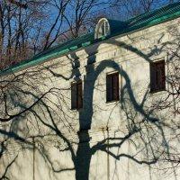 теневог дерево :: Александр Шурпаков
